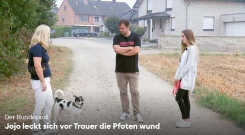 ドイツ 犬 テレビ