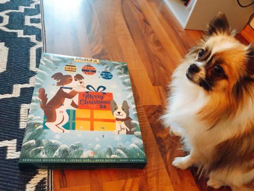 犬 アドベントカレンダー